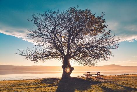Merkle Trees - Integrität schaffen in Blockchains