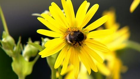 Honey, please: Rettet die Bienen!