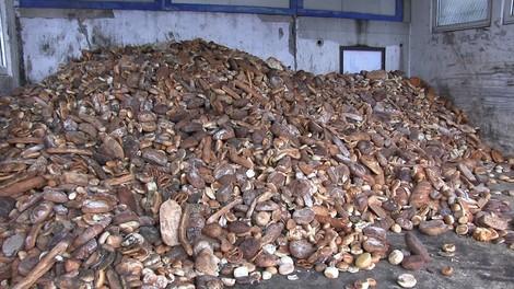 Lebensmittel im Müll: Eine Multimedia-Reportage zeigt das erschütternde Ausmaß – und Lösungen