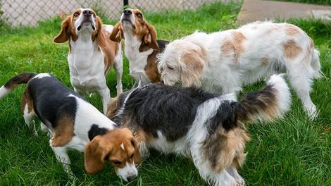 Crispr-Cas9: Gen-Editing hilft bei Muskelschwund bei Hunden