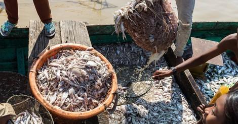 How much is the fish: Wie der Klimawandel einen See in Kambodscha leerfegt