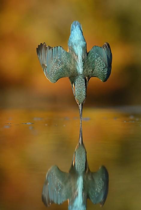 720.000 Klicks bis zum perfekten Foto eines Eisvogels