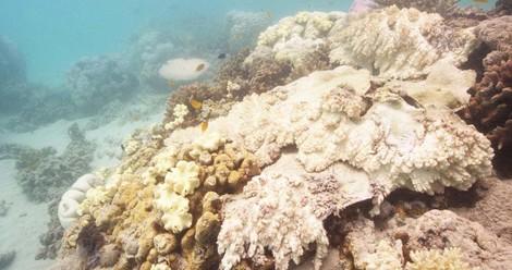 Wir Mörder des Great Barrier Reef