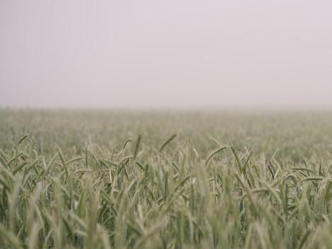 brand-eins-Podcast | Warum gibt es noch Hunger?