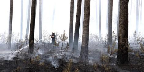 Brandenburg versucht verzweifelt Wald zu retten, in NRW wird Wald unter Polizeischutz vernichtet