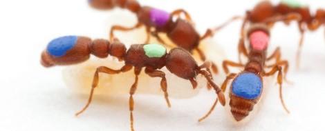 Was passiert, wenn Ameisen sich benehmen wie WG-Genossen?