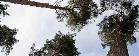 Opfer des Klimawandels: Der deutsche Wald