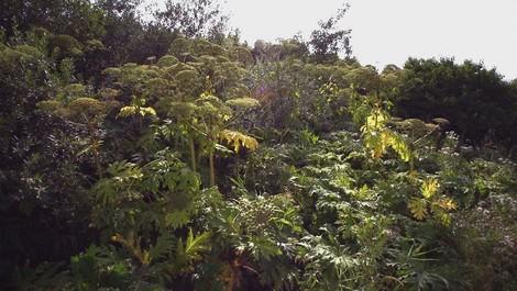Invasion der Pflanzen