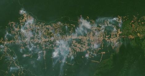Der Amazonas ist keine Lunge – und andere wissenswerte Fakten