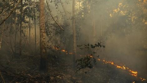 Was du über die Regenwald-Brände (wahrscheinlich) noch nicht wusstest
