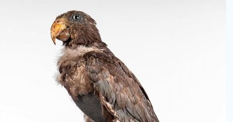 Alexander von Humboldt hatte einen Vogel