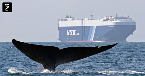 Warum deutlich größere Walbestände dem Klimaschutz helfen