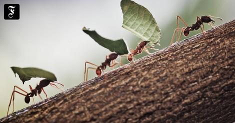 Wie die Ameisen – Plädoyer für eine Kreislaufwirtschaft