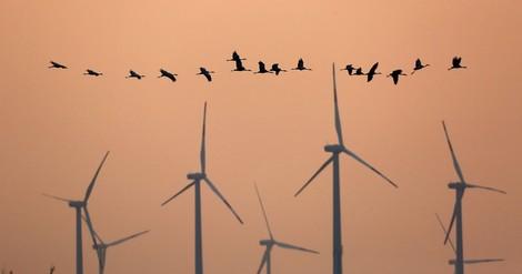 Zwei Umweltjournalisten im Gespräch: Wie sollte man neutral bleiben angesichts der Natur-Apokalypse?