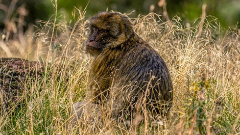 Artenschutz: Ein wirklich gelungenes Affentheater