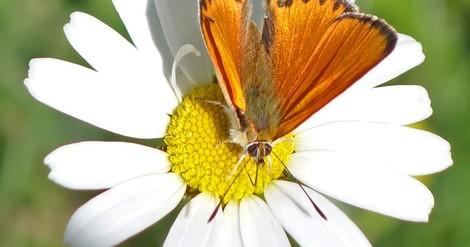 Die missachtete Gefahr: Beim Insektenschwund muss sofort gehandelt werden