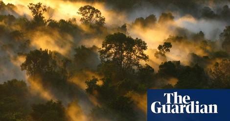 Studie: Die tropischen Wälder verlieren ihre Fähigkeit, CO2 aufzunehmen