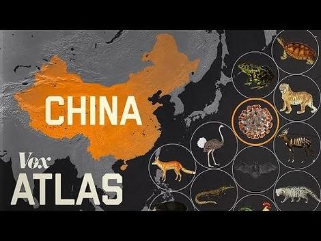 Warum entstehen neue Epidemien ausgerechnet in China? Ein Erklärvideo