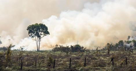 Die Wahrscheinlichkeit von Pandemien steigt mit zunehmender Vernichtung von Ökosystemen