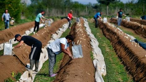 Ernte ohne Grenze – Spargel und Flüchtlingskrise