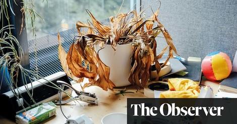 Laubbraun im Lockdown – ein Fotoessay verlassener Büropflanzen