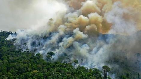 Wir Regenwaldvernichter