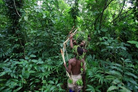 Eine (kleine) gute Nachricht vom tropischen Regenwald