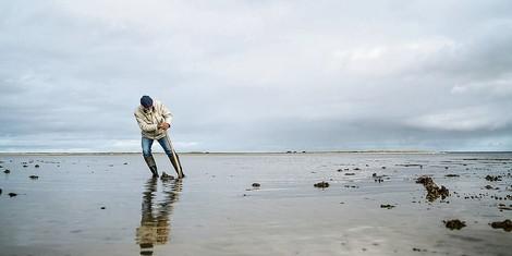 Über das größte Feuchtgebiet des Planeten – das Wattenmeer